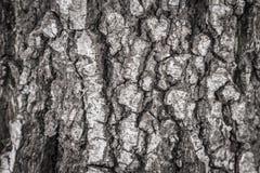 Textura da árvore de casca Fotos de Stock Royalty Free