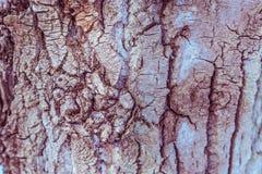 Textura da árvore de casca Imagem de Stock