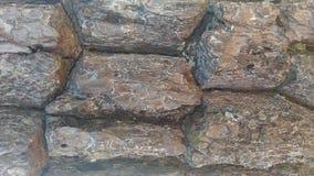 Textura da árvore de casca Foto de Stock Royalty Free