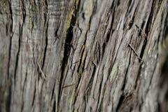 Textura da árvore de casca Fundo da árvore de casca Textura e fundo abstratos para desenhistas Imagem de Stock