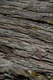 Textura da árvore de casca Fundo da árvore de casca Textura e fundo abstratos para desenhistas Fotografia de Stock