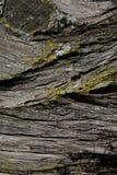 Textura da árvore de casca Fundo da árvore de casca Textura e fundo abstratos para desenhistas Foto de Stock