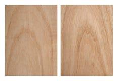 Textura da árvore de cinza Fotografia de Stock