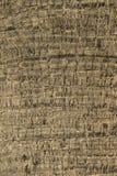 textura da árvore de coco Imagem de Stock