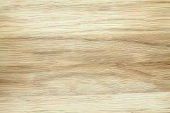 Textura da árvore de faia Imagem de Stock