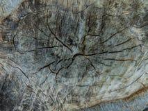 Textura da árvore de floresta Imagem de Stock