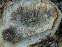 Textura da árvore de floresta Fotos de Stock