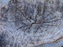 Textura da árvore de floresta Imagem de Stock Royalty Free