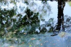 Textura da árvore e da água Fotos de Stock Royalty Free