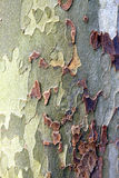 Textura da árvore plana Foto de Stock