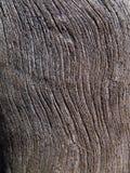 Textura da árvore seca 7 Imagem de Stock