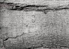 Textura da árvore velha cinzenta Fotos de Stock Royalty Free