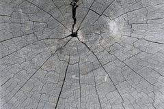 Textura da árvore velha do corte Imagens de Stock Royalty Free