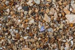 Textura da areia do mar feita de partes do shell e da pedra Fotos de Stock Royalty Free