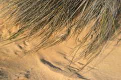 Textura da areia e da grama Fotos de Stock Royalty Free