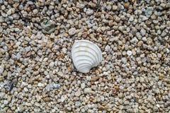 Textura da areia e do shell Imagem de Stock