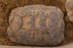 Textura da carapaça da tartaruga Imagens de Stock Royalty Free