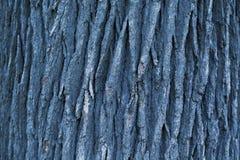 Textura da casca Fotografia de Stock Royalty Free