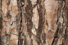 Textura da casca Imagem de Stock Royalty Free