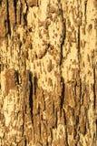 Textura da casca Foto de Stock