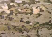 Textura da casca Fotografia de Stock