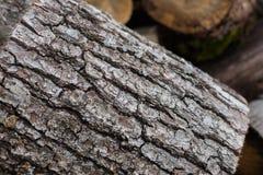 Textura da casca Imagens de Stock Royalty Free
