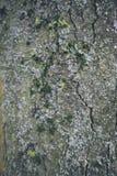 Textura 3 da casca Fotografia de Stock
