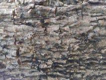 Textura da casca Imagem de Stock