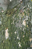 Textura da casca Fotos de Stock Royalty Free