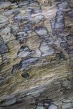 Textura da casca da madeira lançada à costa em St Cyrus em Escócia Fotos de Stock