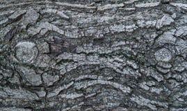 A textura da casca da noz Imagem de Stock Royalty Free
