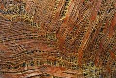 Textura da casca da palmeira Foto de Stock Royalty Free