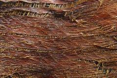 Textura da casca da palmeira Fotos de Stock Royalty Free