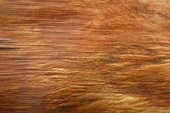 Textura da casca da palmeira Fotos de Stock