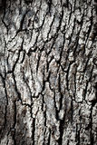 Textura da casca de árvore Imagem de Stock