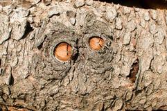 A textura da casca de árvore Imagens de Stock Royalty Free