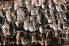 A textura da casca de árvore Imagem de Stock Royalty Free