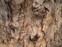 Textura da casca de árvore Fotografia de Stock