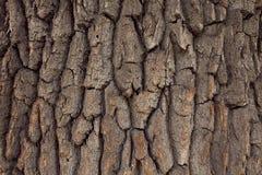 Textura da casca de árvore Fotografia de Stock Royalty Free