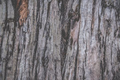 Textura da casca de árvore Fotos de Stock