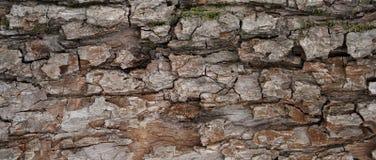 Textura da casca de árvore de Brown imagens de stock