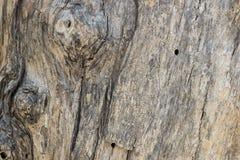 Textura da casca de árvore cortiça Imagens de Stock