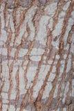 Textura da casca de árvore cortiça Imagem de Stock Royalty Free