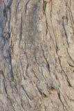 Textura da casca de árvore cortiça Imagem de Stock