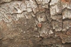 Textura da casca de árvore da floresta Fotos de Stock Royalty Free