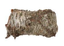 Textura da casca de árvore do vidoeiro Imagens de Stock Royalty Free