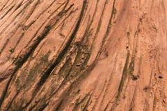 Textura da casca de árvore feita do cimento Imagem de Stock