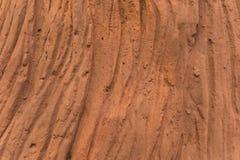 Textura da casca de árvore feita do cimento Foto de Stock Royalty Free
