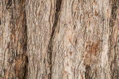 Textura da casca de árvore Fundo da madeira da natureza Imagem de Stock