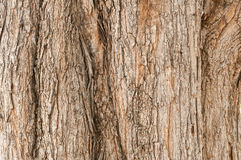 Textura da casca de árvore Fundo da madeira da natureza Fotografia de Stock Royalty Free